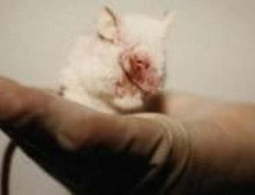 """""""sperimentazione animale"""" nel XXI secolo"""
